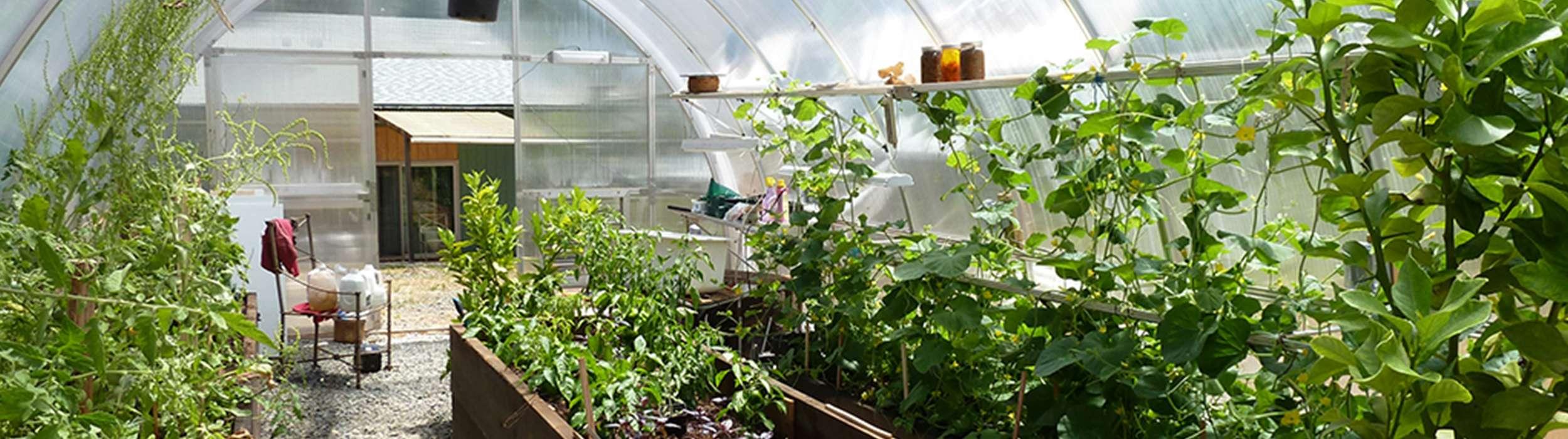 Gemuse Im Gewachshaus Tomaten Paprika Gurken Gewachshaus