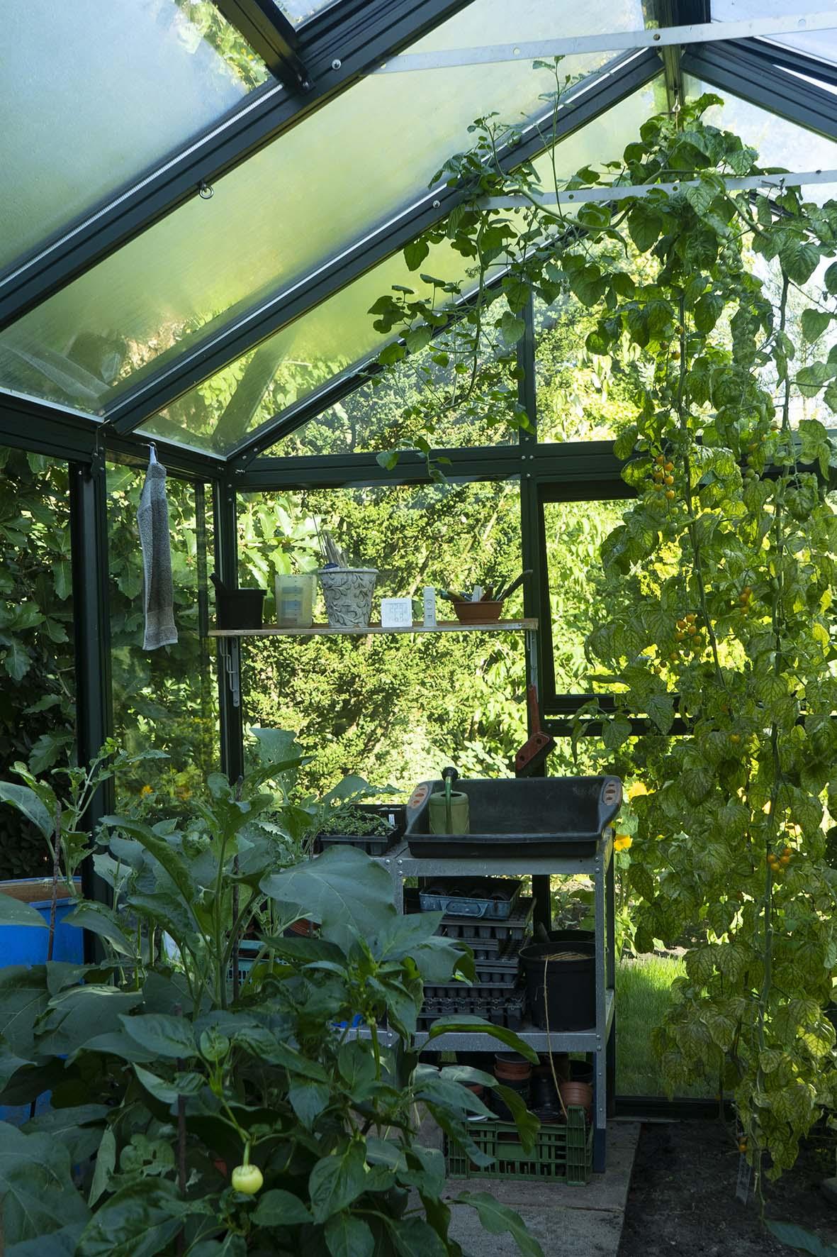 Beliebt Tomaten-Gewächshaus: Welche Modelle eignen sich? CJ04